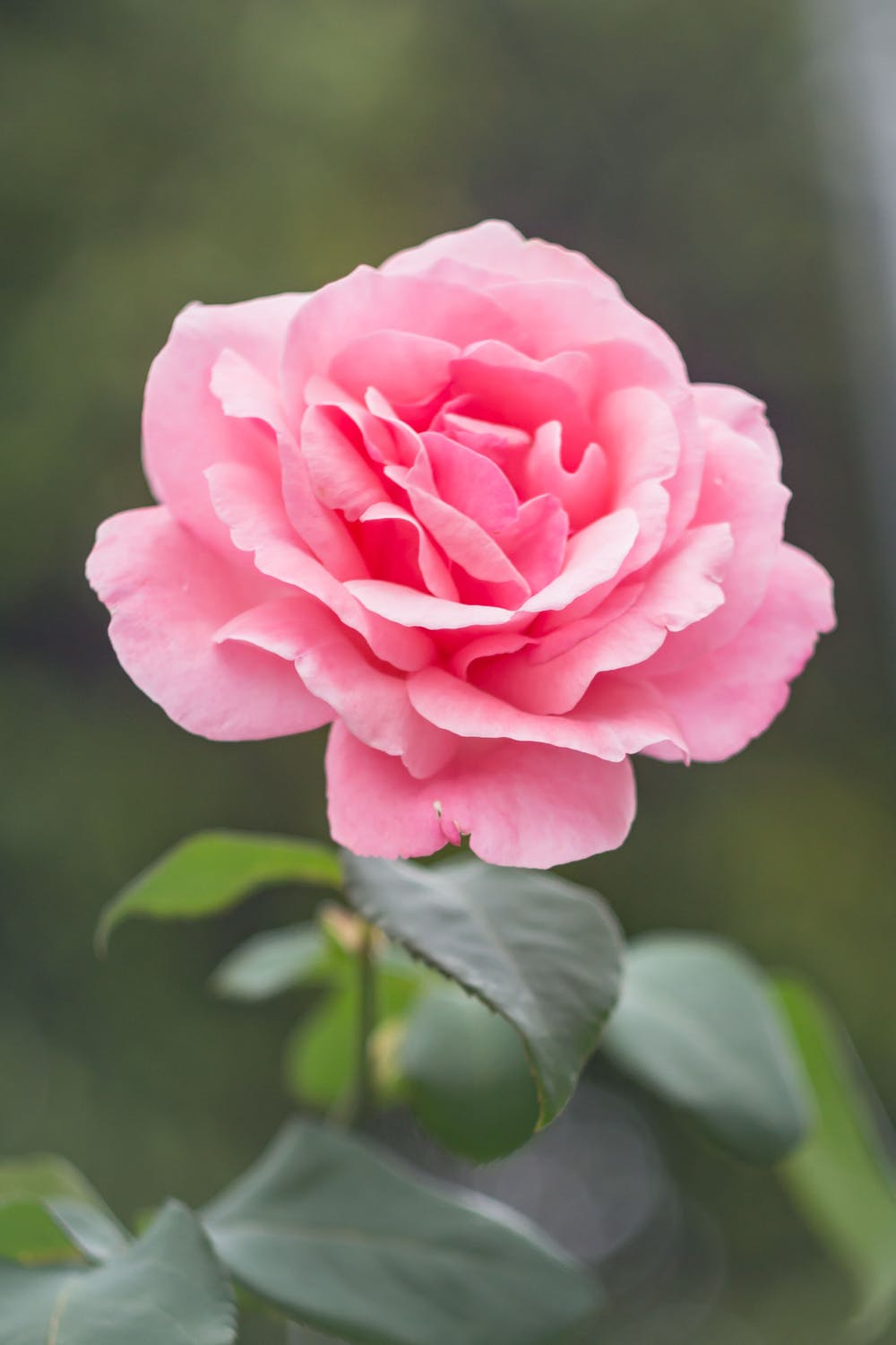 When You're Trying to Save Time and Money, Why Choose Online Flower Delivery Services?