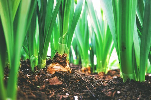 Advantages of Organic Fertilizers